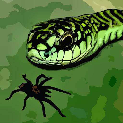 Tarantula vs Snake