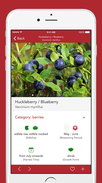 Wild Berries and Herbs 2 PRO