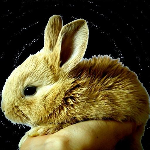 ウサギの逆襲