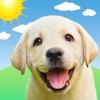 Weather Puppy Forecast + Radar - iPhoneアプリ