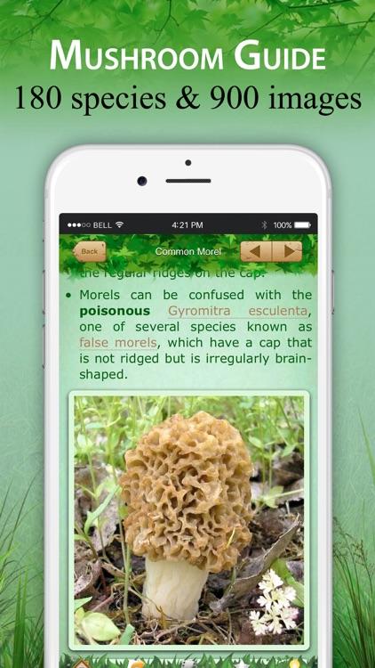 Mushroom Identification &Guide