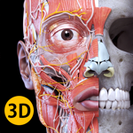 Анатомия - 3D Атлас на пк