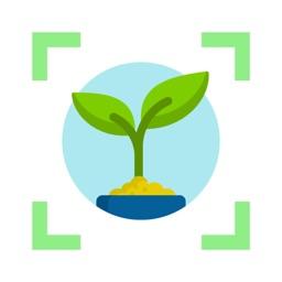 Weed identification leaf snap
