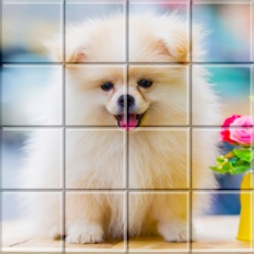 Activities of Tile Puzzle Pomeranian Dogs