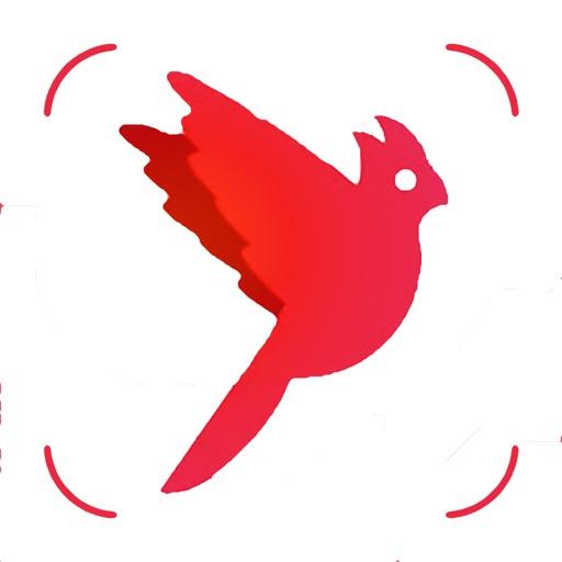 Bird Box - Photo Identify Bird