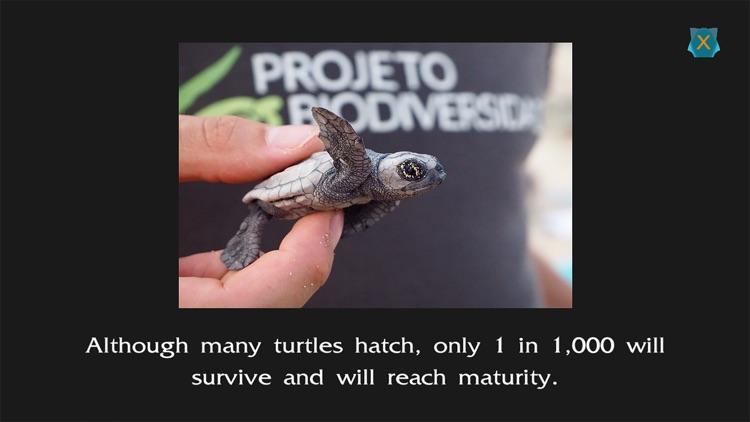 Turtle Ranger screenshot-7