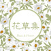 花草集 - 你的家庭盆栽多肉植物养护专家