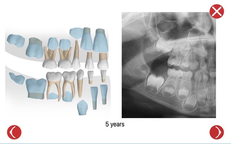 Dental Corpus Primary скриншот программы 3
