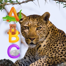 Animal Touch Sounds 2