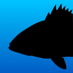 Fish Rules: Fishing App