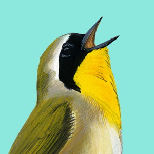 Song Sleuth: Auto Bird Song ID app