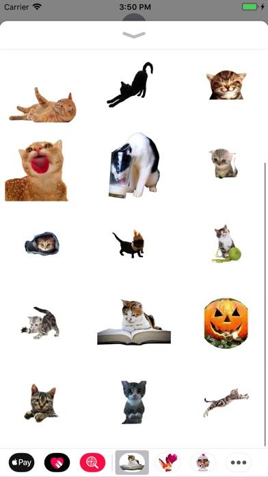 Fun Sweet Cats screenshot 2