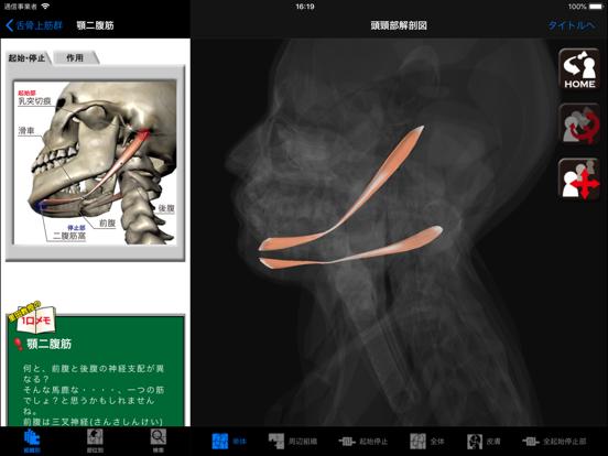DS ANATOMY HEAD & NECKのおすすめ画像2