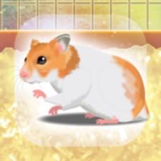 Hamster Pet