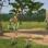 Cohérence cardiaque: le safari
