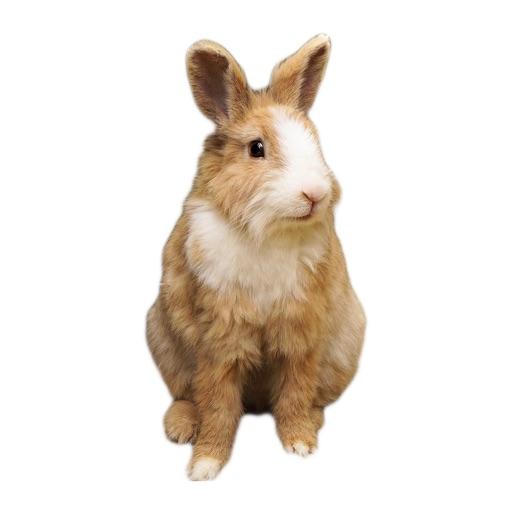 Kaninchen Fotoaufkleber