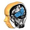 Icône : Brain Tutor 3D