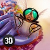 Insect Fly Life Survival Simulator