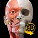 筋肉 | 骨格 - 解剖学3D アトラス