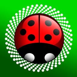 LittleBig LadyBug Photo