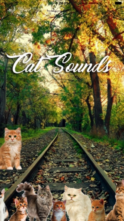 Cat Sounds and Music