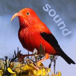Bird ID Hawaii for iPhone