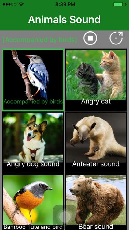 Animals Sound - Animal Sound Effects Free