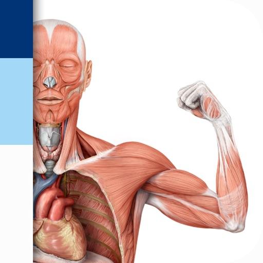 PROMETHEUS - LernKarten der Anatomie App Bewertung - Medical - Apps ...