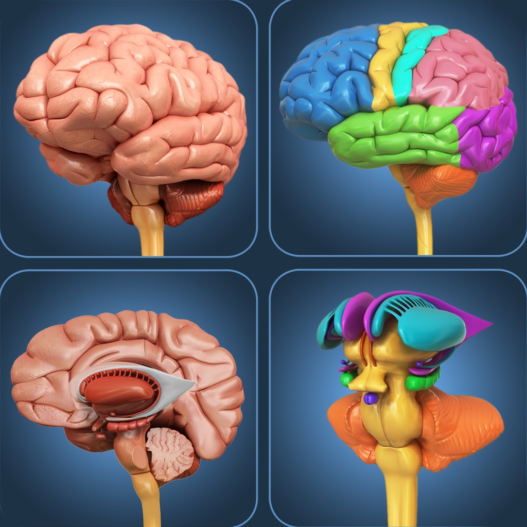 My Brain Anatomy App Data Review Medical Apps Rankings