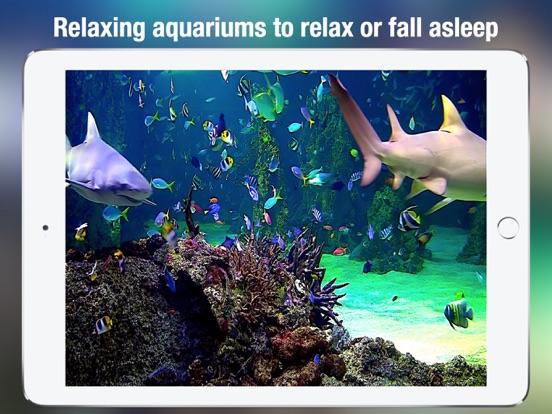Screenshot #5 for Aquarium Live HD