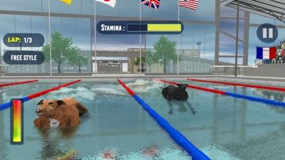 犬のスイミングレースのおすすめ画像4