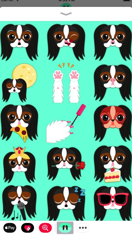 Tri Color Japanese Chin