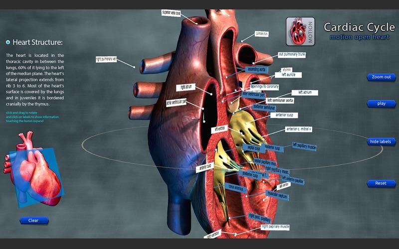 Cardiac Cycle Open Heart - MacGenius