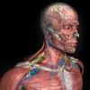 Introdução Anatomia Humana 3D - iPadアプリ