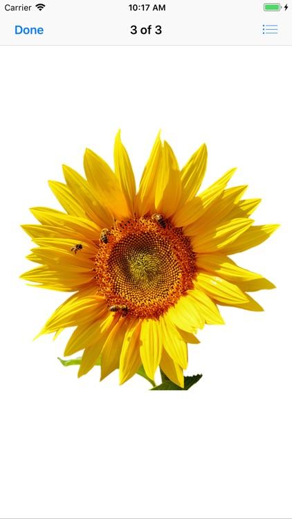 Sunflower Stickers screenshot-3