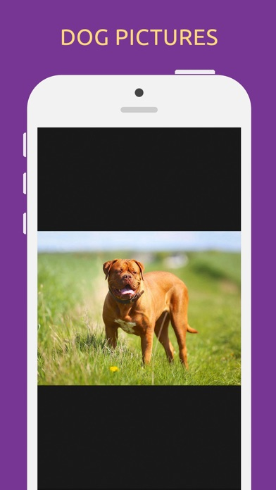 Dog Breeds Quiz Game screenshot three