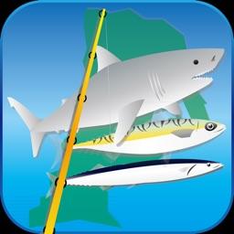 気仙沼海釣り物語