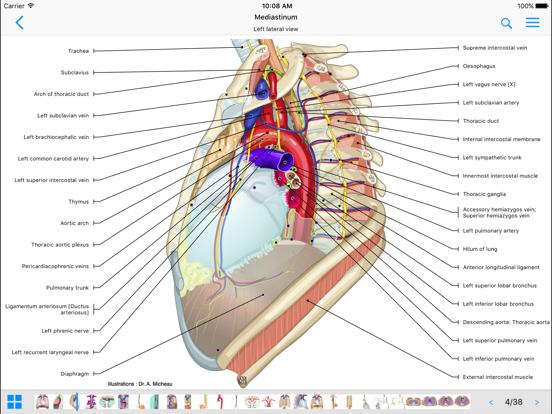 Anatomy app ipad