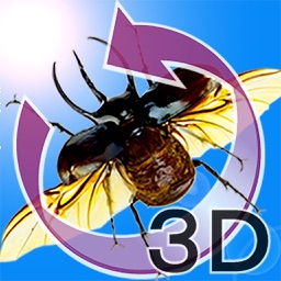 The 3D Insects I