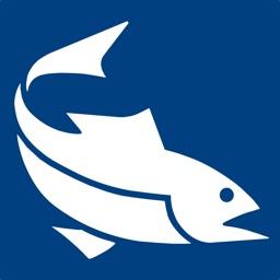 Fish iReports