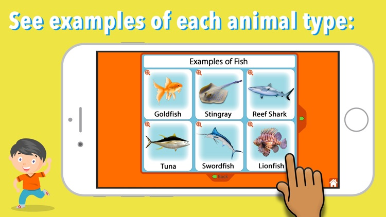 Animal Kingdom (Vertebrates)