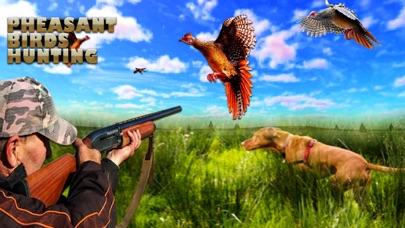 Pheasant Bird Hunting 3d