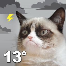 Grumpy Cat Weather Forecast