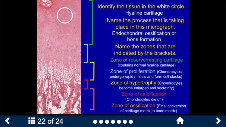 Histology Complete -SecondLook