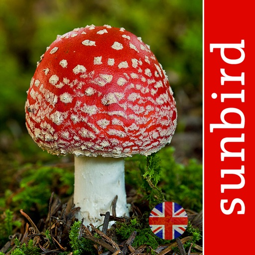 Mushroom Id - British Fungi Identification Guide to Toadstools and Mushrooms