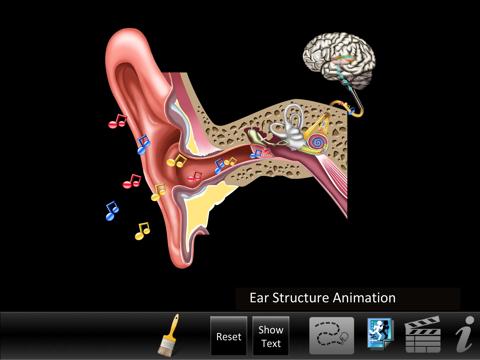 Ear ID - náhled