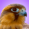 iBird Pro Guide to Birds Icon