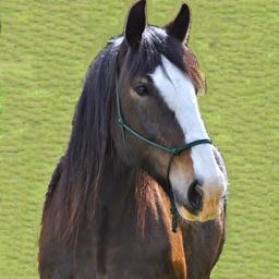Horse Keeper