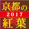 ぶらぶら京都 京都の紅葉