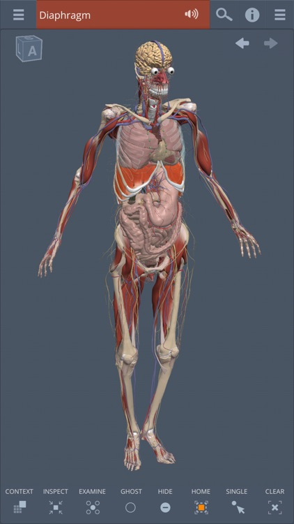 Whole body: 3D real-time